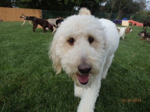 Dog of the Month – January 2015