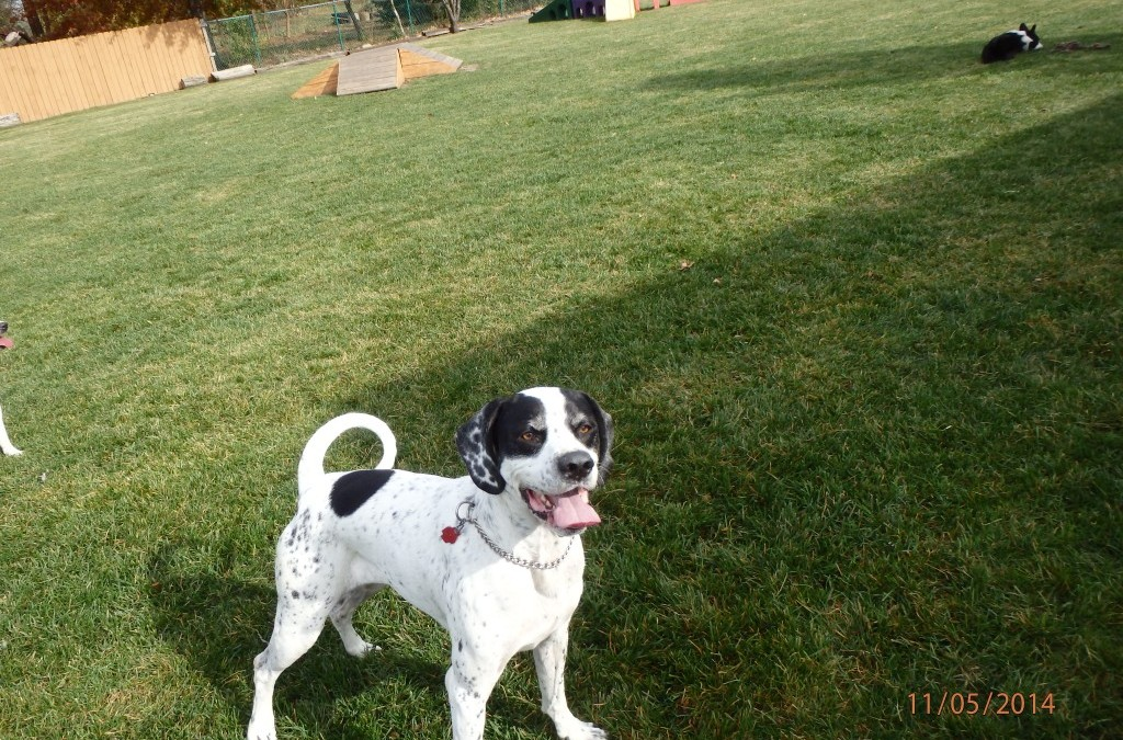 Dog of the Month – February 2015